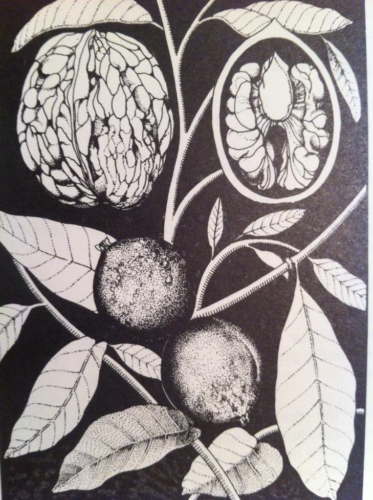 Barbara Henderson, walnut illustration, Good Food, p. 127.