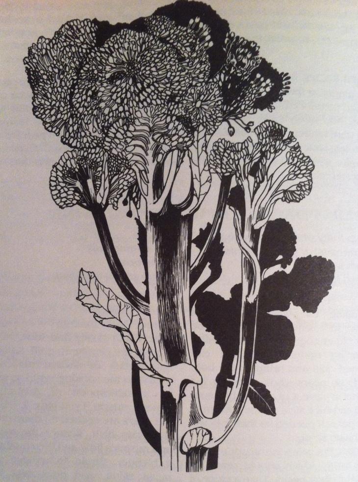 Barbara henderson broccoli
