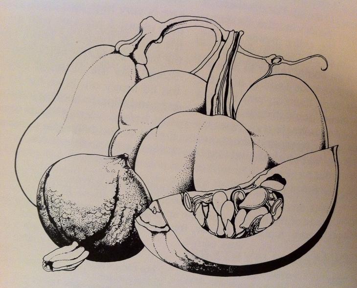 good food pumpkin illustration